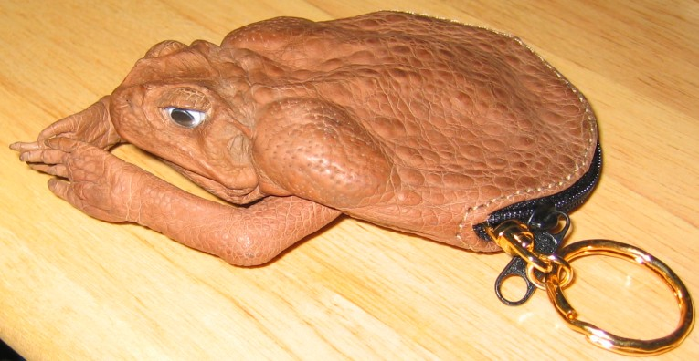 how to humanely kill cane toad
